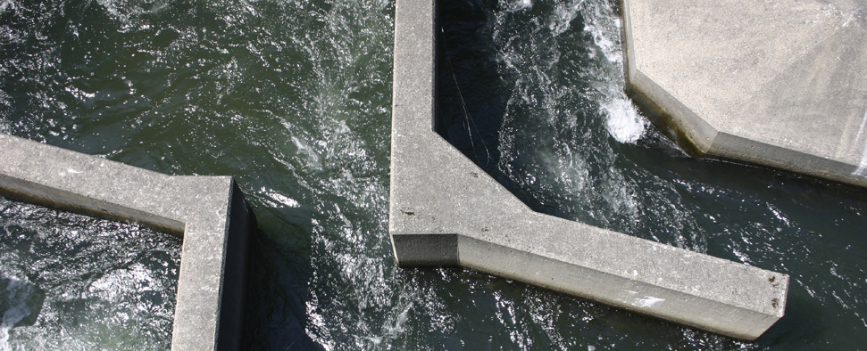 Fish ladder at the Bonneville Dam on the Columbia River <br/>-- Mark Jensen