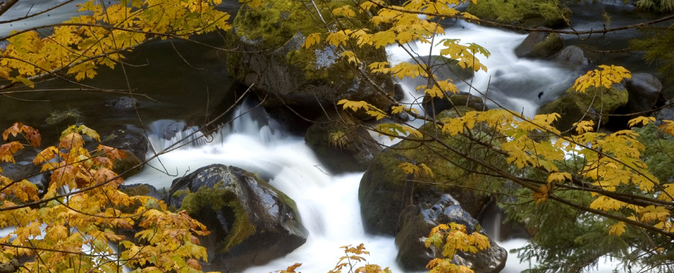 Fall colors along the Upper McKenzie River in the Oregon Cascades<br/>-- Timm OCobhthaigh