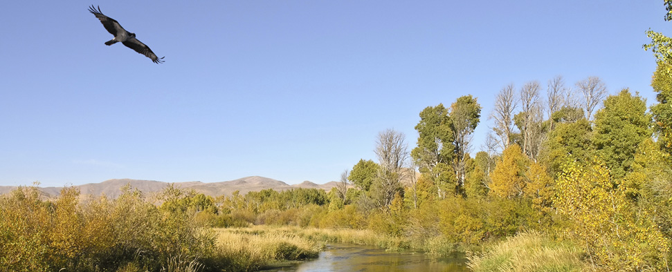 World famous fly fishing destination, Silver Creek near Sun Valley, Idaho<br/>-- ddbell