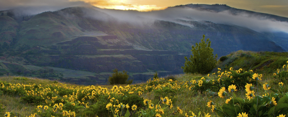 Sunrise on balsam root wild flowers<br/>-- Kevin Mill