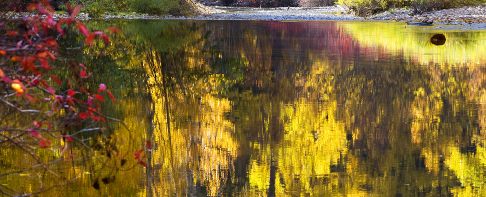 Fall colors reflect on the Wenatchee River near Stevens Pass and Leavenworth, Washington<br/>-- William Perry