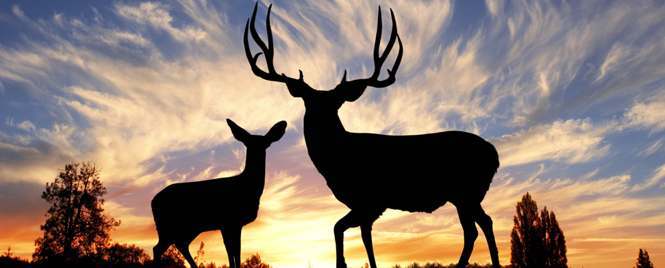 A buck and doe mule deer against a sunset.<br/>-- Jason Lugo